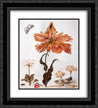 A Parrot Tulip, Auriculas, and Red Currants, with a Magpie Moth, its Caterpillar and Pupa 20x22 Black or Gold Ornate Framed and Double Matted Art Print by Maria Sibylla Merian