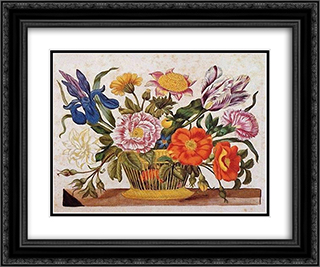 from Der Raupen wunderbare Verwandlung und sonderbare Blumennahrung, Plate CLXIX 24x20 Black or Gold Ornate Framed and Double Matted Art Print by Maria Sibylla Merian