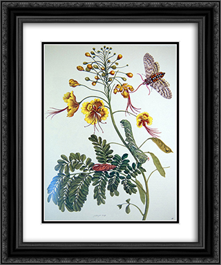 from Metamorphosis insectorum Surinamensium, Plate XLV 20x24 Black or Gold Ornate Framed and Double Matted Art Print by Maria Sibylla Merian