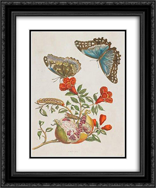 Granatapfel 20x24 Black or Gold Ornate Framed and Double Matted Art Print by Maria Sibylla Merian