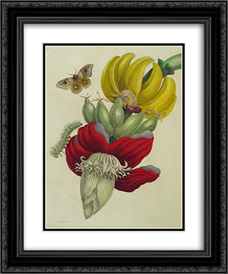 Inflorescence of Banana 20x24 Black or Gold Ornate Framed and Double Matted Art Print by Maria Sibylla Merian