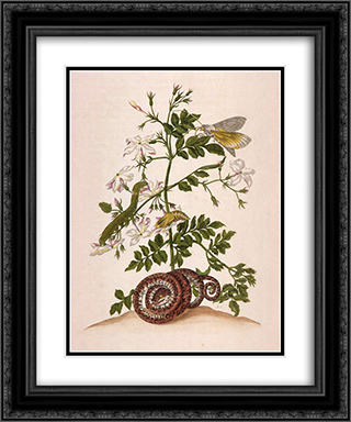 Metamorphosis insectorum Surinamensium (Metamorphosis of the Insects of Suriname), figure 46 20x24 Black or Gold Ornate Framed and Double Matted Art Print by Maria Sibylla Merian