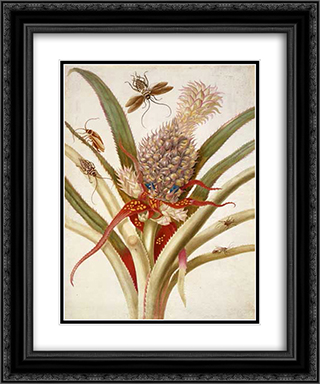 Pineapple and cockroaches 20x24 Black or Gold Ornate Framed and Double Matted Art Print by Maria Sibylla Merian
