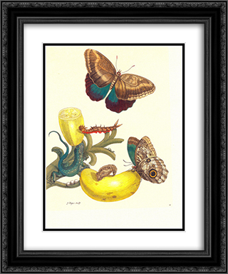 Plate #23- Musa paradisiaca, Caligo teucer and Cnemidophorus lemniscatus 20x24 Black or Gold Ornate Framed and Double Matted Art Print by Maria Sibylla Merian