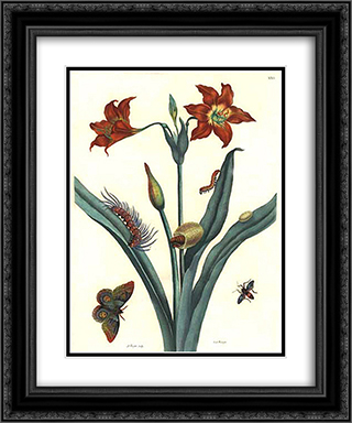 Rote Lilie 20x24 Black or Gold Ornate Framed and Double Matted Art Print by Maria Sibylla Merian