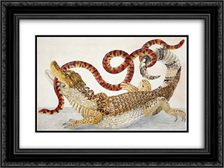 Spectacled Caiman (Caiman crocodilus) and a False Coral Snake (Anilius scytale) 24x18 Black or Gold Ornate Framed and Double Matted Art Print by Maria Sibylla Merian