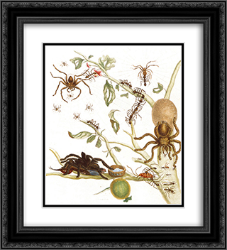 Spiders, ants and hummingbird on a branch of a guava 20x22 Black or Gold Ornate Framed and Double Matted Art Print by Maria Sibylla Merian
