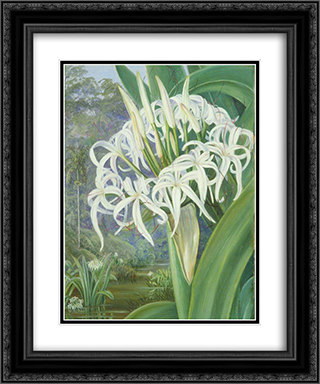 A Bornean Crinum 20x24 Black or Gold Ornate Framed and Double Matted Art Print by Marianne North