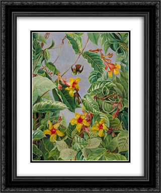 A Brazilian Climbing Shrub and Humming Birds 20x24 Black or Gold Ornate Framed and Double Matted Art Print by Marianne North