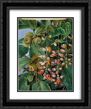 A Darjeeling Oak Festooned with a Climber 20x24 Black or Gold Ornate Framed and Double Matted Art Print by Marianne North