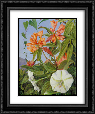 A Javan Rhododendron and Ipomoea 20x24 Black or Gold Ornate Framed and Double Matted Art Print by Marianne North