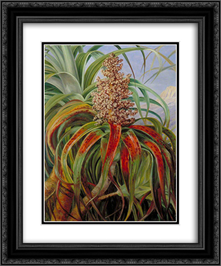 A New Zealand Dracophyllum 20x24 Black or Gold Ornate Framed and Double Matted Art Print by Marianne North