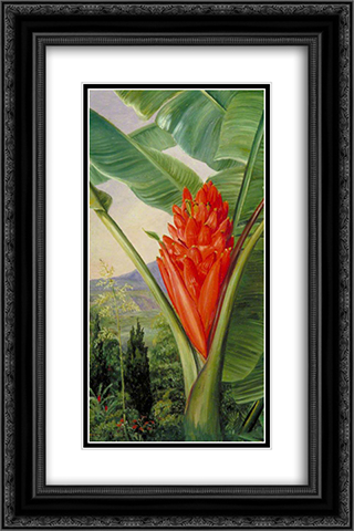 Banana, American Aloe and Cypress in a Garden, Java 16x24 Black or Gold Ornate Framed and Double Matted Art Print by Marianne North