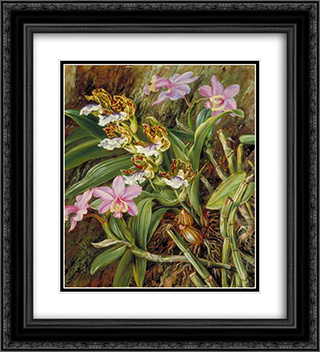 Brazilian Orchids 20x22 Black or Gold Ornate Framed and Double Matted Art Print by Marianne North