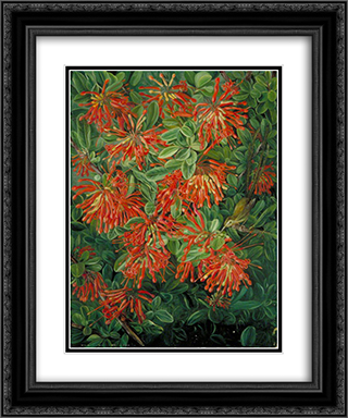 Burning Bush and Emu Wren of Chili 20x24 Black or Gold Ornate Framed and Double Matted Art Print by Marianne North