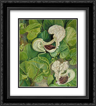 Carnivorous Flower 20x22 Black or Gold Ornate Framed and Double Matted Art Print by Marianne North