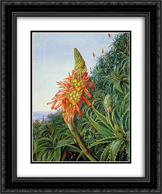 Common Aloe in Flower, Teneriffe 20x24 Black or Gold Ornate Framed and Double Matted Art Print by Marianne North