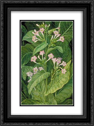 Common Tobacco 18x24 Black or Gold Ornate Framed and Double Matted Art Print by Marianne North