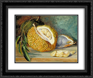 Durian Fruit from a Large Tree, Sarawak, Borneo 24x20 Black or Gold Ornate Framed and Double Matted Art Print by Marianne North
