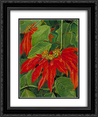 Flor de Pascua or Easter Flower, at Morro Velho, Brazil 20x24 Black or Gold Ornate Framed and Double Matted Art Print by Marianne North