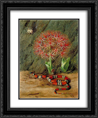 Flor Imperiale, Coral Snake and Spider, Brazil 20x24 Black or Gold Ornate Framed and Double Matted Art Print by Marianne North