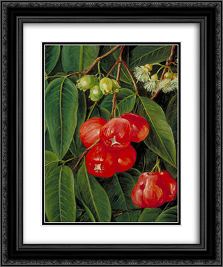 Flowers and Fruit of the Jamboa Boll, Java 20x24 Black or Gold Ornate Framed and Double Matted Art Print by Marianne North