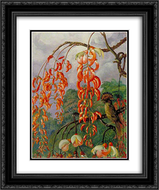 Flowers of a Coral Tree and King of the Flycatchers, Brazil 20x24 Black or Gold Ornate Framed and Double Matted Art Print by Marianne North