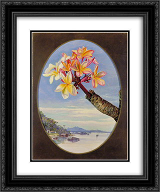 Flowers of Jasmine Mango or Frangipani, Brazil 20x24 Black or Gold Ornate Framed and Double Matted Art Print by Marianne North