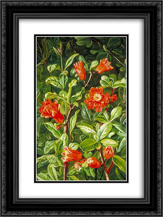 Flowers of the Pomegranate, Painted in Teneriffe 18x24 Black or Gold Ornate Framed and Double Matted Art Print by Marianne North