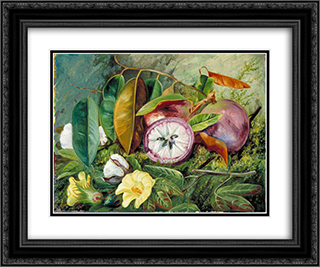 Foliage, Flowers and Seed-Vessels of Cotton and Fruit of Star Apple, Jamaica 24x20 Black or Gold Ornate Framed and Double Matted Art Print by Marianne North