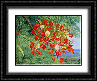 Foliage and Flowers of a Madagascar Tree 24x20 Black or Gold Ornate Framed and Double Matted Art Print by Marianne North