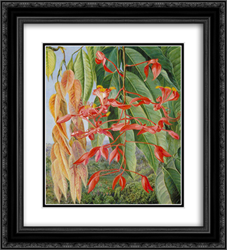 Foliage and Flowers of the Burmese Thaw-Ka or Soka 20x22 Black or Gold Ornate Framed and Double Matted Art Print by Marianne North