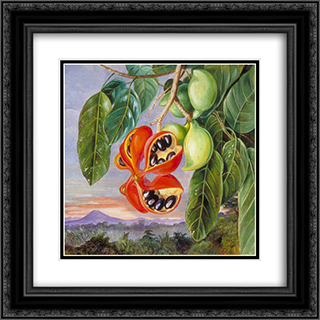 Foliage and Fruit of Sterculia parviflora 20x20 Black or Gold Ornate Framed and Double Matted Art Print by Marianne North