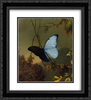 Blue Morpho Butterfly 20x22 Black or Gold Ornate Framed and Double Matted Art Print by Martin Johnson Heade