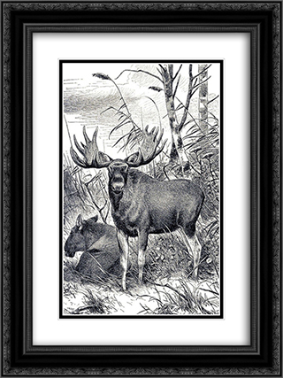 Alces alces 18x24 Black or Gold Ornate Framed and Double Matted Art Print by Richard Friese