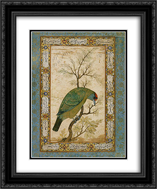 A Barbet (Himalayan blue-throated bird) 20x24 Black or Gold Ornate Framed and Double Matted Art Print by Ustad Mansur