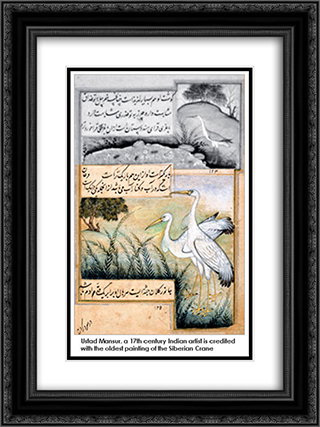 Crane 18x24 Black or Gold Ornate Framed and Double Matted Art Print by Ustad Mansur