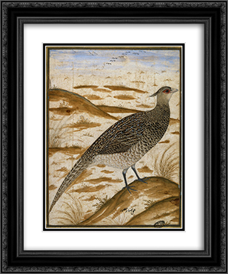 Himalayan cheer pheasant 20x24 Black or Gold Ornate Framed and Double Matted Art Print by Ustad Mansur