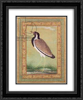 Indian Lapwing 20x24 Black or Gold Ornate Framed and Double Matted Art Print by Ustad Mansur