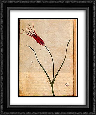 Tulip 20x24 Black or Gold Ornate Framed and Double Matted Art Print by Ustad Mansur