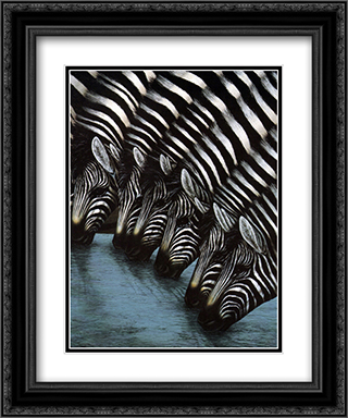 Zebra's Watering Hole 2x Matted 15x18 Black Ornate Framed Art Print by Dexter Griffin