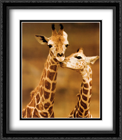 Giraffe First Love 2x Matted 28x32 Extra Large Black Ornate Framed Art Print by D'raine, Ron
