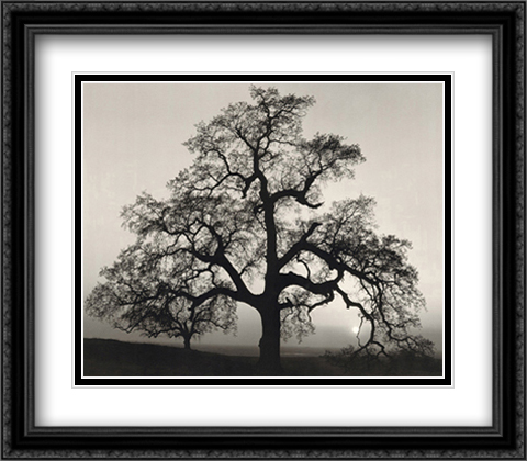 Oak Tree, Sunset City, California 2x Matted 34x28 Extra Large Black Ornate Framed Art Print by Ansel Adams