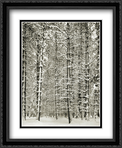 Pine Forest In The Snow, Yosemite Nation 2x Matted 28x40 Extra Large Black Ornate Framed Art Print by Ansel Adams