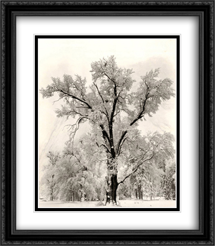 Oak Tree 2x Matted 28x40 Extra Large Black Ornate Framed Art Print by Ansel Adams