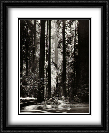 Redwoods, Founders Grove 2x Matted 28x34 Extra Large Black Ornate Framed Art Print by Adams, Ansel