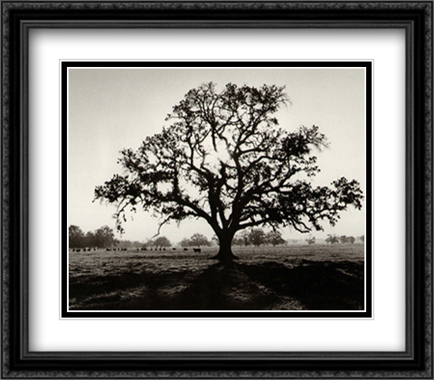Oak Tree Sunrise 2x Matted 32x28 Extra Large Black Ornate Framed Art Print by Adams, Ansel
