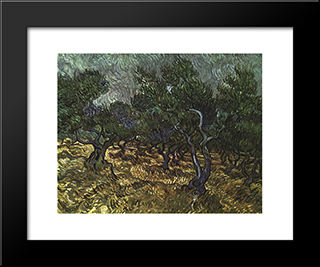 The Olive Grove: Modern Black Framed Art Print by Vincent van Gogh