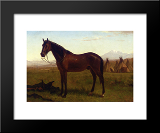 Portrait Of A Horse: Modern Black Framed Art Print by Albert Bierstadt