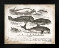 Antique Whales I: Framed Art Print by Babbitt, Gwendolyn